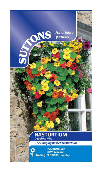 Picture of Nasturtium* Dayglow Mix
