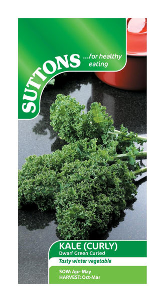 Picture of Curly Kale Dwarf Green Curled